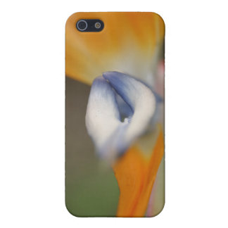 Bird Of Paradise Flower Case For iPhone 5