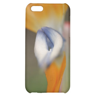 Bird Of Paradise Flower Case For iPhone 5C