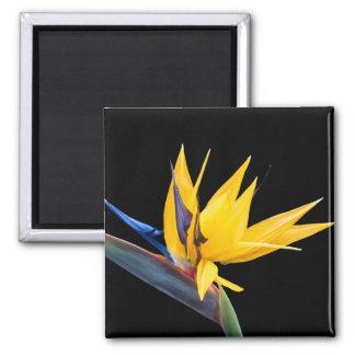 Bird of Paradise Flower Magnet
