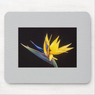 Bird-Of-Paradise Flower Mousepads
