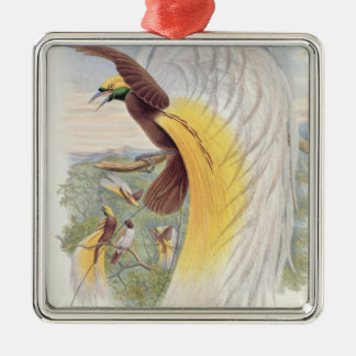 Bird of Paradise, from 'Birds of New Guinea' Christmas Ornament