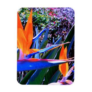 Bird of Paradise Hawaii Rectangular Photo Magnet