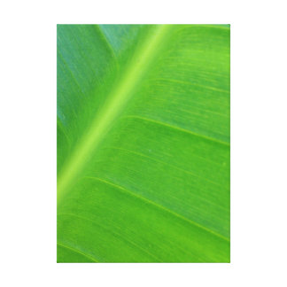 Bird of Paradise Leaf Gallery Wrapped Canvas