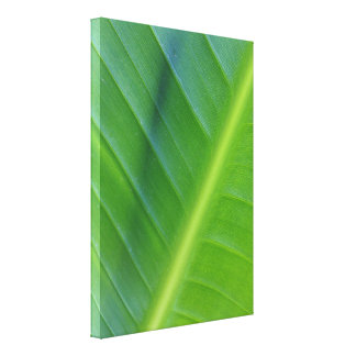 Bird of Paradise Leaf Photo Canvas Prints