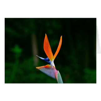 Bird of Paradise, Maui Greeting Cards
