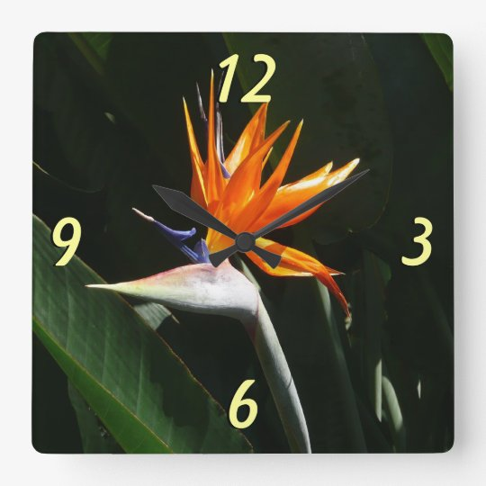 Bird of Paradise Orange Tropical Flower Square Wall
