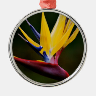 Bird of paradise Silver-Colored round decoration