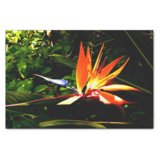 Bird of Paradise Tissue Paper