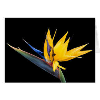 Bird of Paradise Tropical Flower and Facts Card