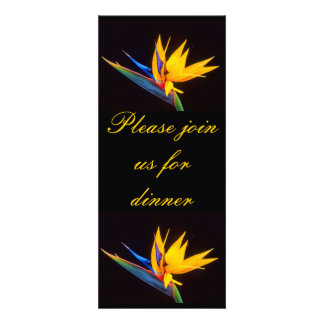 Bird of Paradise Tropical Flower Announcements