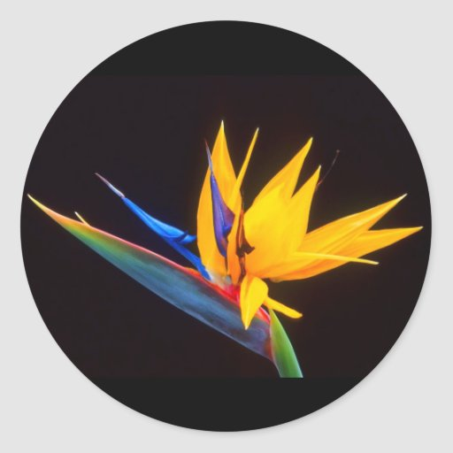 Bird of Paradise: Tropical Flower Stickers
