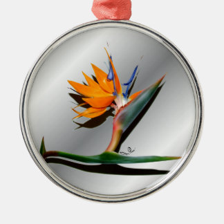 Bird of Paradise with Shadow Ornament