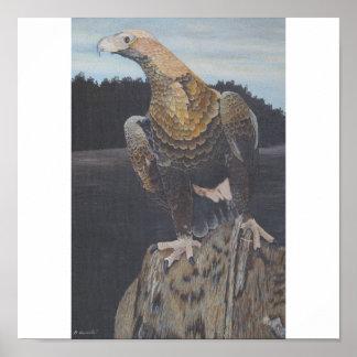 Bird of pray poster