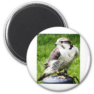 Bird of Prey #2- Peregrine Falcon 6 Cm Round Magnet