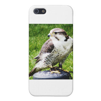 Bird of Prey #2- Peregrine Falcon iPhone 5/5S Covers
