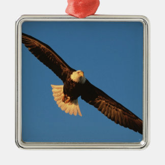 Bird of Prey, Bald Eagle in flight, Kachemak Silver-Colored Square Decoration