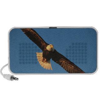 Bird of Prey, Bald Eagle in flight, Kachemak Speakers