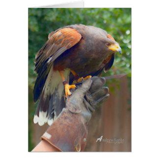 Bird of prey Birthday Card