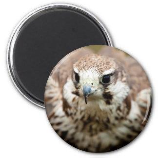 Bird of prey flying 6 cm round magnet