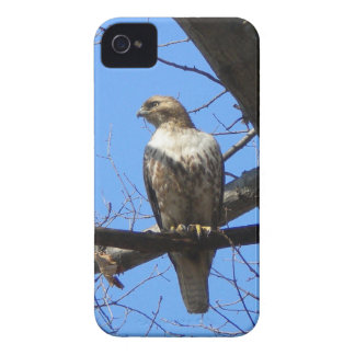 Bird Of Prey iPhone 4 case