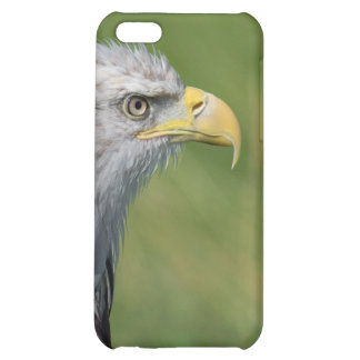 Bird of Prey Cover For iPhone 5C