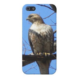 Bird of Prey Speck iPhone case iPhone 5/5S Cover