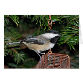 Bird On A Birdfeeder Card