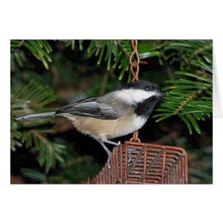Bird On A Birdfeeder Greeting Card