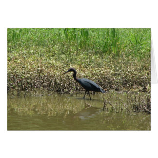 Bird on Avery Island, Louisiana Greeting Cards