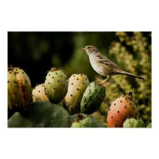 Bird On Cactus Poster
