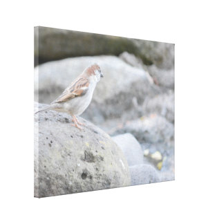 Bird on Rocks Canvas Print