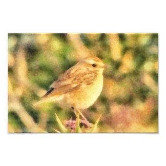 Bird painting photo print