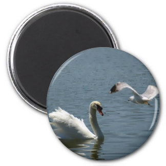 Bird Playing With Swan Refrigerator Magnets