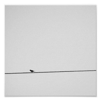 Bird put in black and white poster