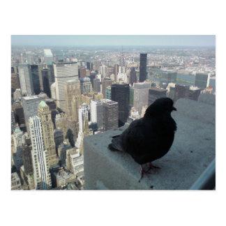 Bird s Eye View of New York Post Card