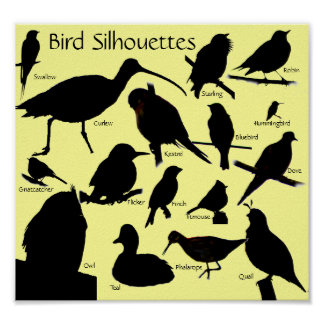 Bird Silhouettes (16) Poster