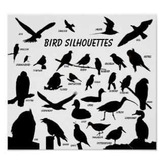 Bird Silhouettes (29) Poster