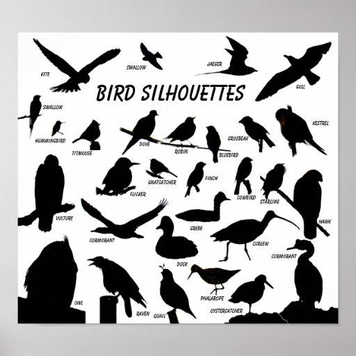 Bird Silhouettes (29) Poster