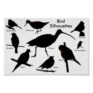 Bird Silhouettes 2 Poster