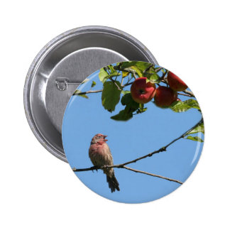 Bird Singing in an Apple Tree Buttons