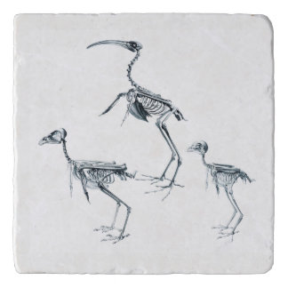 Bird Skeleton Trivet