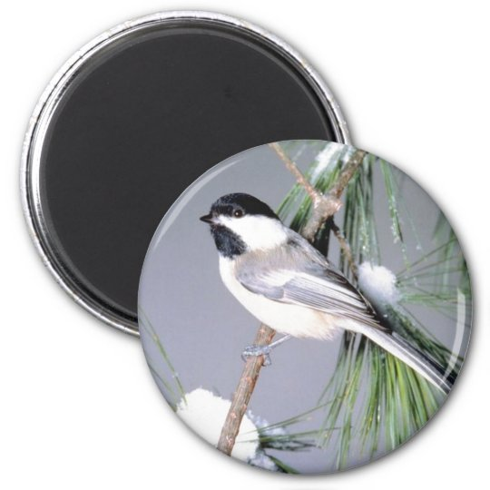 Bird Snow Covered Branch Magnet