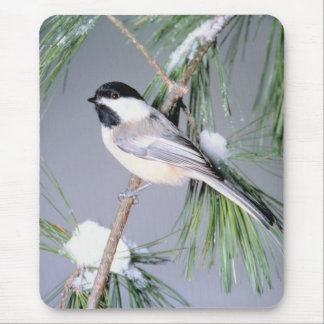 Bird Snow Covered Branch Mouse Mat