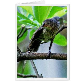 Bird Stretching on Magnolia Tree Card