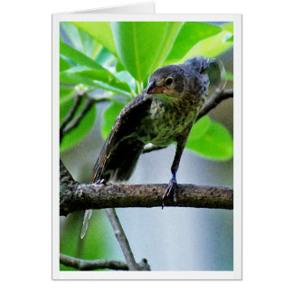 Bird Stretching on Magnolia Tree Note Card