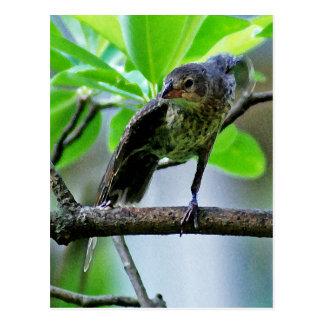 Bird Stretching on Magnolia Tree Postcard