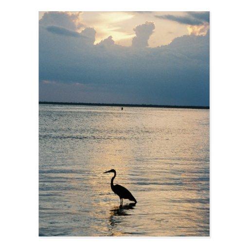 bird sunset postcard