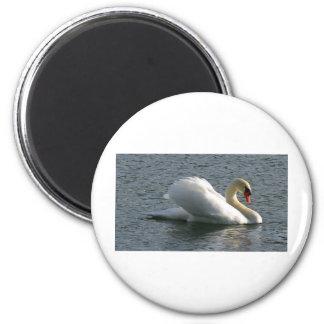 Bird Swan Refrigerator Magnet