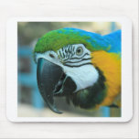 Bird Trouble Mouse Pads