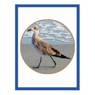 Bird Walks By Sea Circle Card Postcard